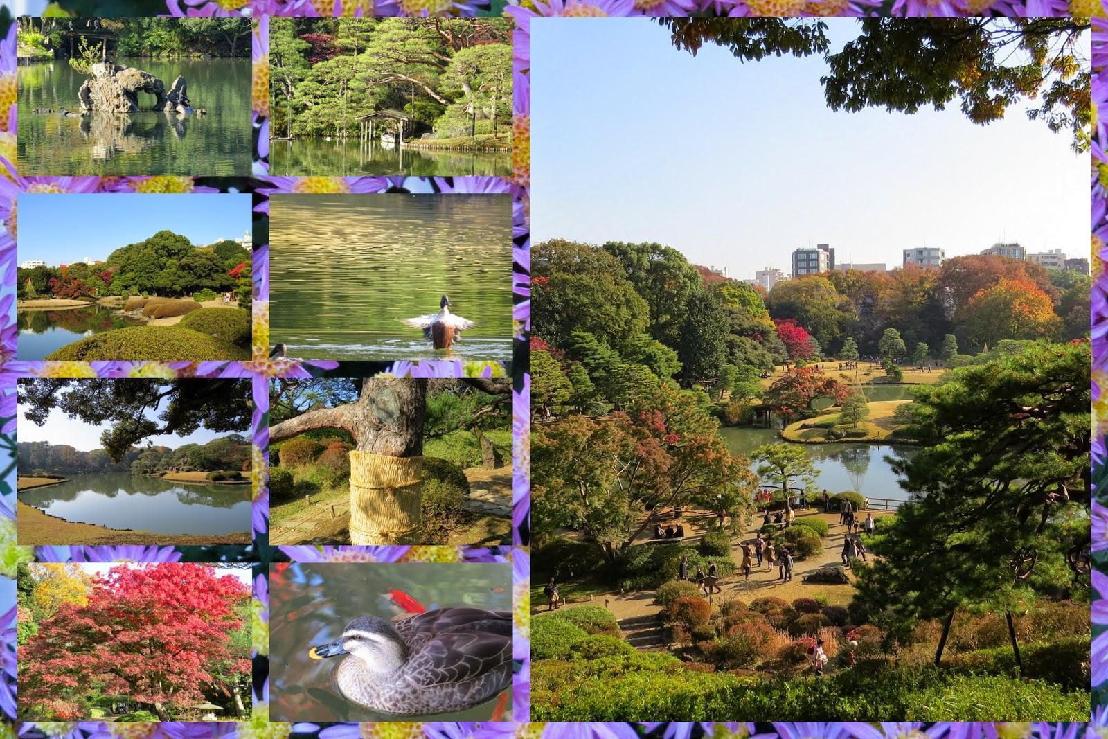 Areas of Tokyo city: Rikugien Park