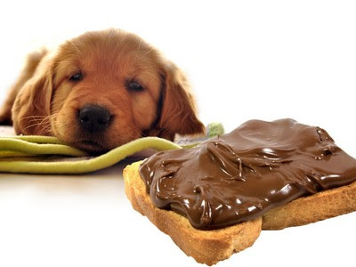 What To Do If Your Dog Eats Chocolate - Tips For Your Pets