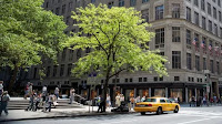 City trees (Photo Credit: Medioimages/Photodisc) Click to Enlarge.