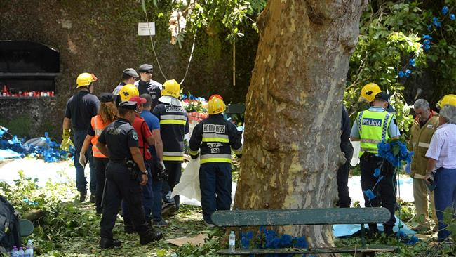 Falling tree kills 13 at religious festival in Portugal