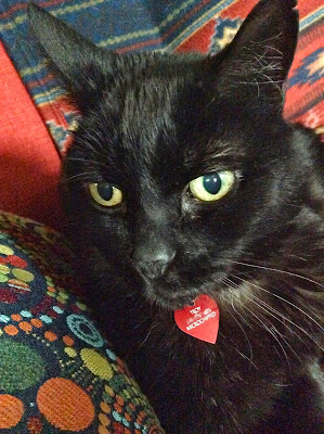 Troy the black cat on his red couch