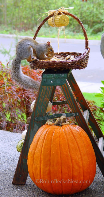 The squirrel eating from the basket on the vintage ladder is cute for fall.