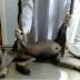 """Homem afirma ter capturado """"chupa-cabra"""" na Ucrânia"""