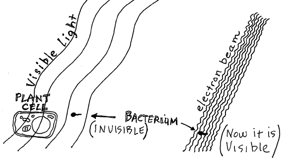 Chapter 3: Using the Microscope and Basic Measurements