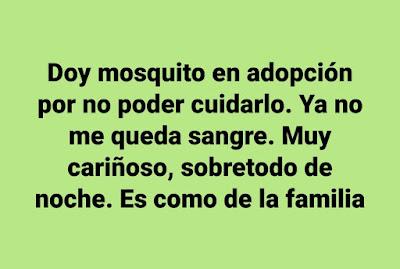 Doy mosquito en adopción por no poder cuidarlo. Ya no me queda sangre. Muy cariñoso, sobretodo de noche. Es como de la familia.