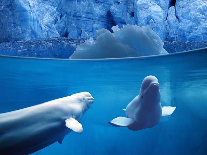 balina resimleri