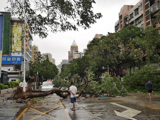 tree blocking Yuehua Road in Zhuhai
