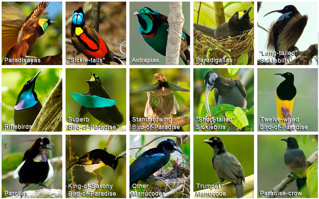 Eco-Now: The Birds of Paradise Project