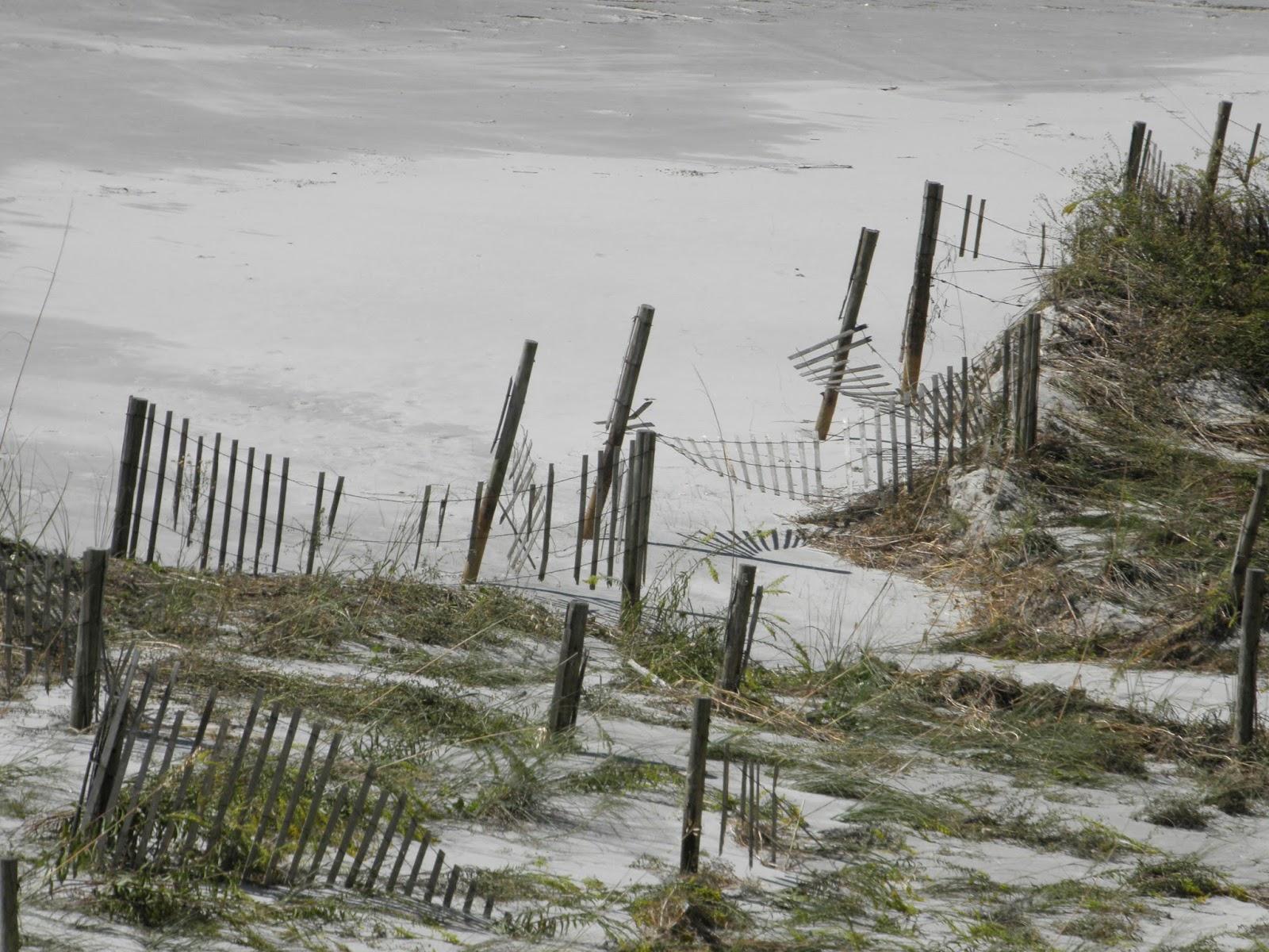 North Myrtle Beach Sea Turtle Patrol