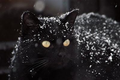 Gerade bei schwarzen Katzen sieht man es sehr stark