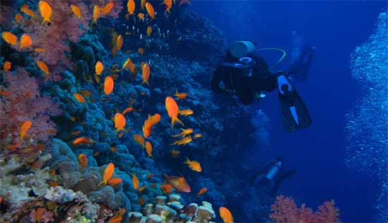 Scuba diving destinations and sites