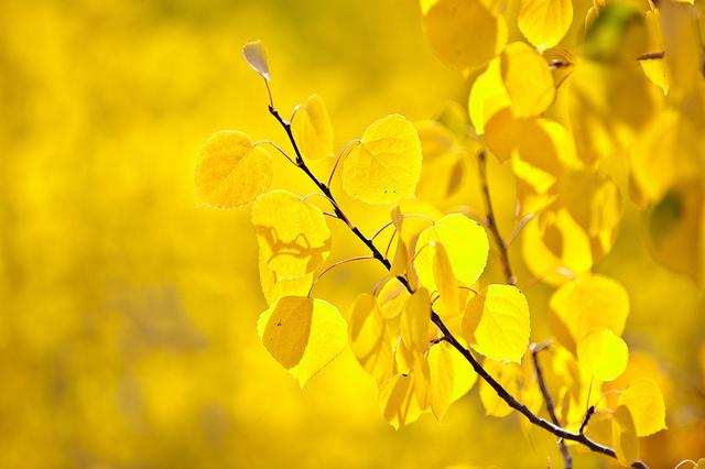 رؤية اللون الأصفر في المنام