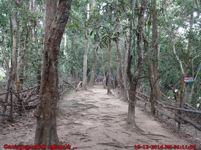 Kuruva Island Trail in Kerala