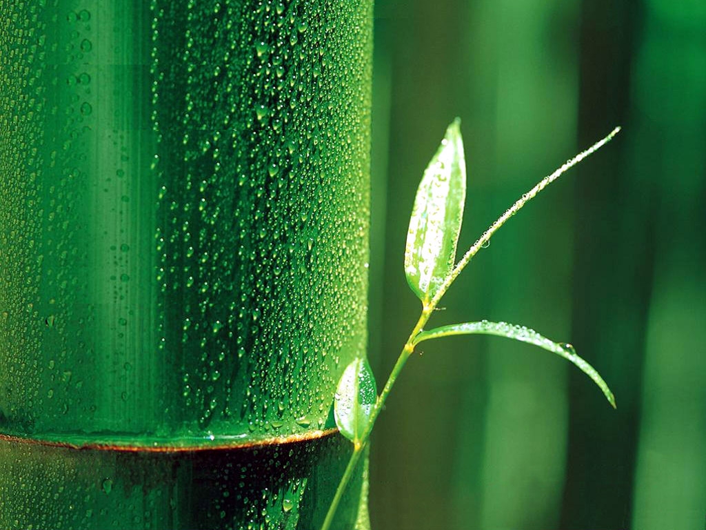 abstract backgrounds wallpaper bamboo - photo #16