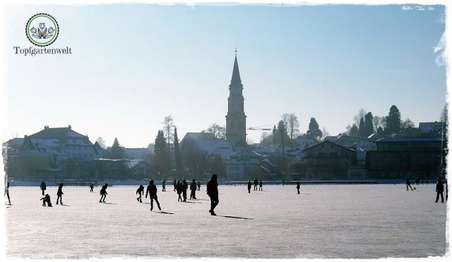 Gartenblog Topfgartenwelt Eislaufen: Mattsee