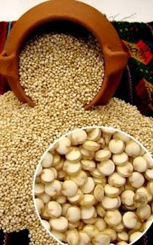Agricultura Cultura Tiahuanaco (Quinua lista para cocinar)