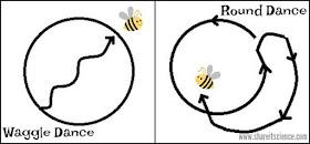 Dance in Code Like a Bee