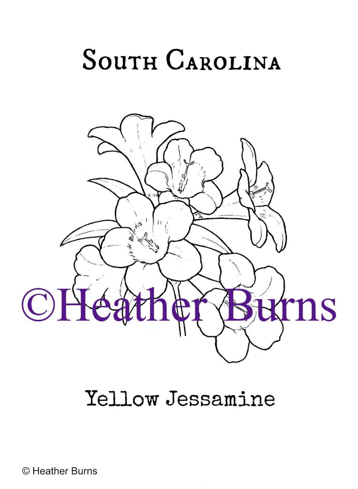 State Flower Coloring Book South Carolina State Flower Yellow