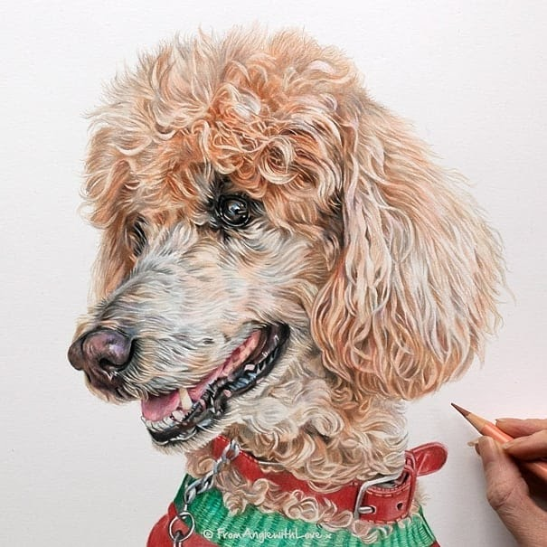 12-Poodle-Angie-Cats-Dogs-and-an-Owl-Pencil-Drawings-www-designstack-co