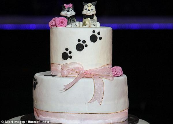 Lễ kết hôn của 2 chú chó Alaska trước sự chứng kiến của hơn 100 vị khách mời
