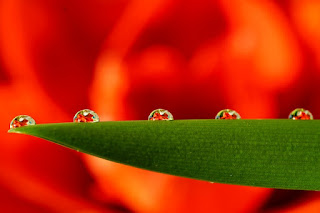 Perkembangan, Ekosistem dan Ciri Khas Makhluk Hidup