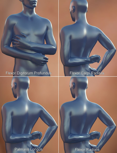 Musculature HD Morphs for Genesis 3 Male