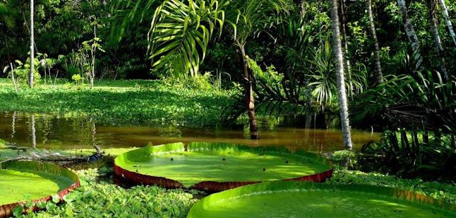 Vegetacion y plantas de la Amazonia