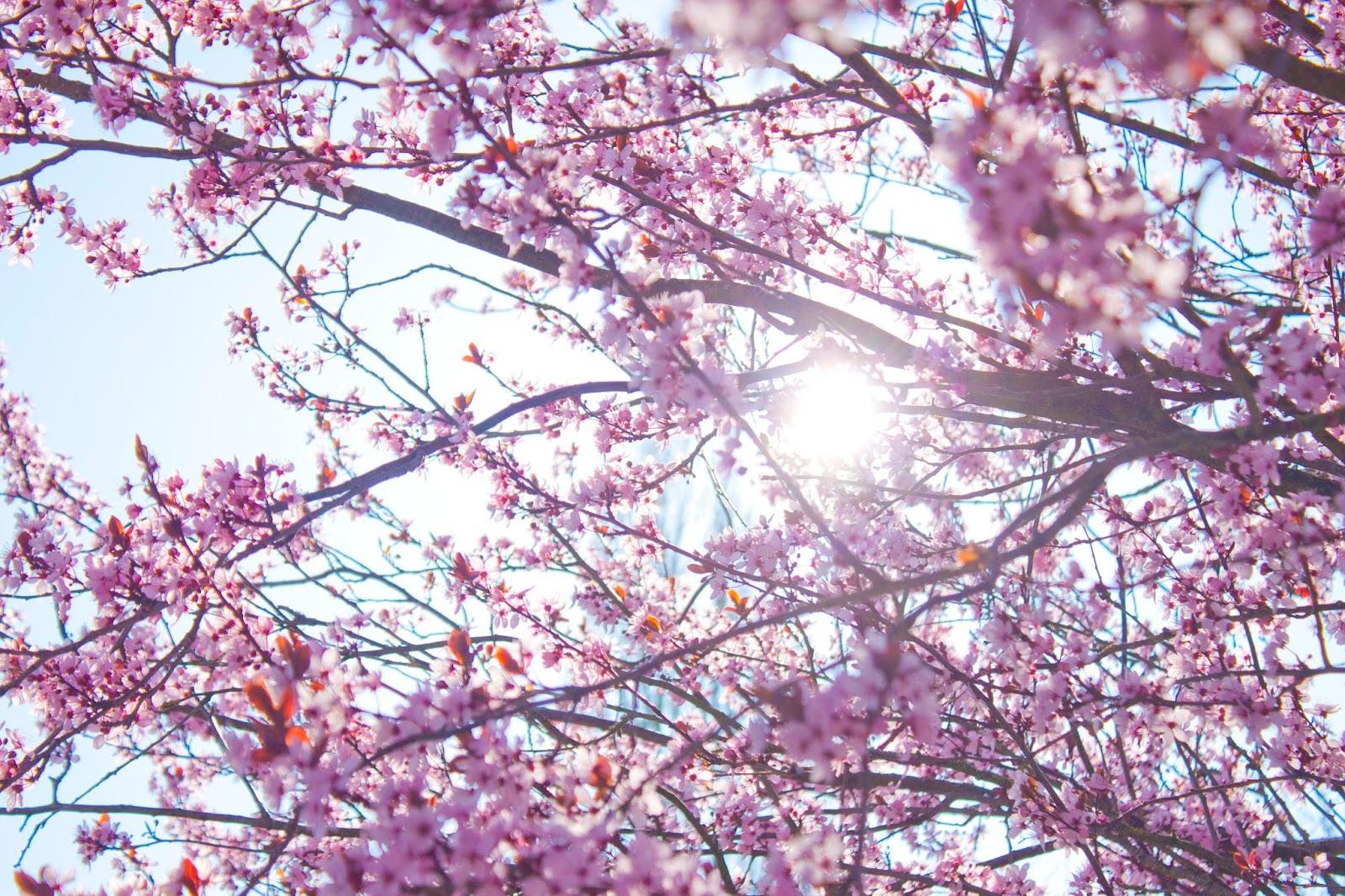 printemps fleurs contre-jour
