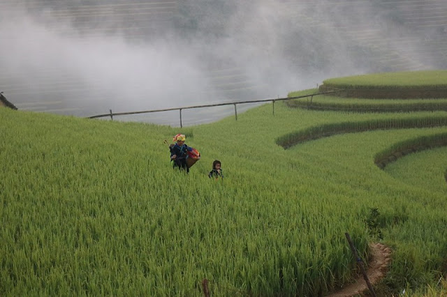 Mu Cang Chai - A special highlight of the mountainous region of North Vietnam 3