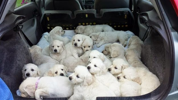 When these road-trippers made packing up the car the cutest activity EVER