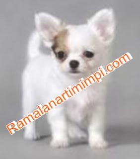 Arti Mimpi Membeli Anjing