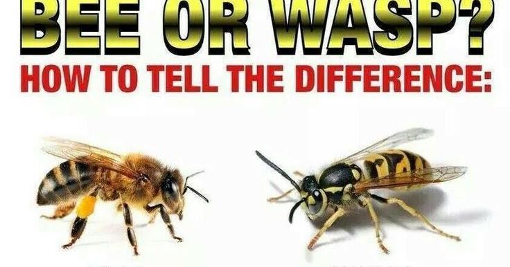experimentum australis psa pesticides bad bees good. Black Bedroom Furniture Sets. Home Design Ideas