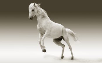 Wallpaper: White Horse on Two Legs