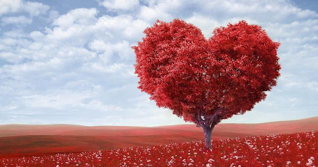 Jangan Menanam Cinta Terlalu Dalam