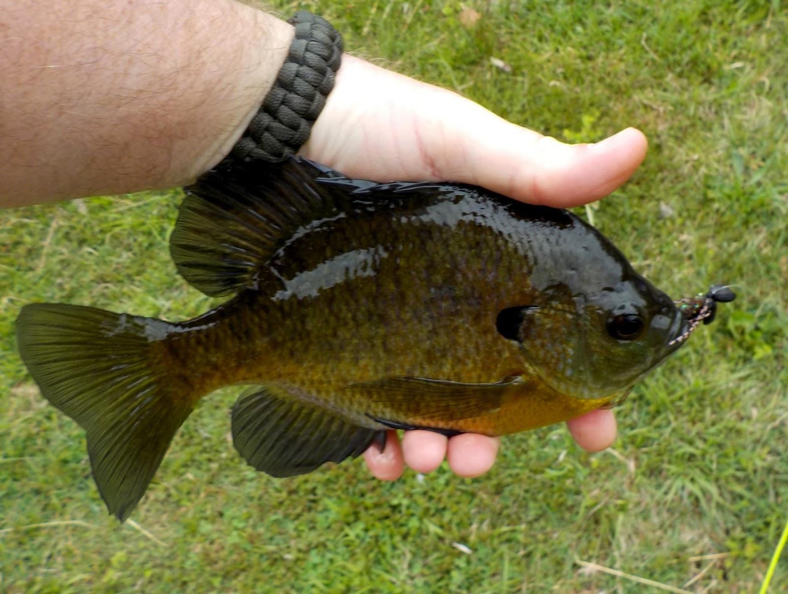 Ralph\'s Fly Box: Fresh Bugs, Friday Fish