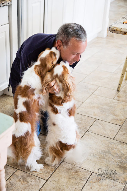 cavalier king charles spaniels kissing