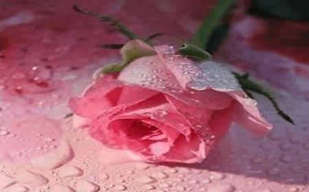 Puisi mutiara cinta
