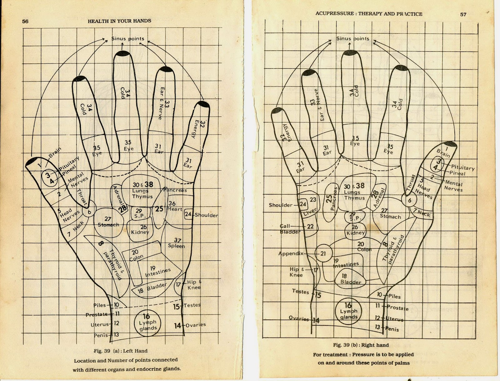 Acupressure Diagram Of Pressure Points 6 Pin Ac Cdi Wiring Reflexology Charts Collection