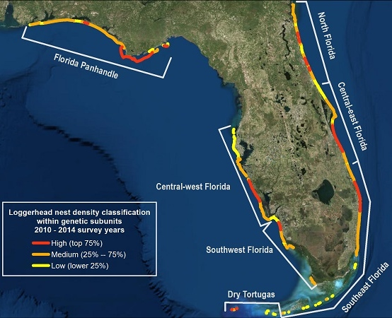 Loggerhead Sea Turtle Nesting Florida Map