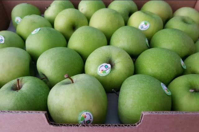 Apel Hijau Import.jpg