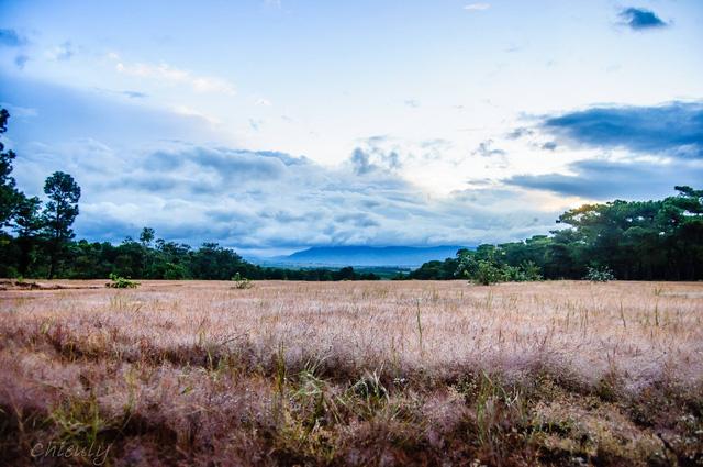 vẻ đẹp hút hồn tại đồi cỏ hồng pleiku gia lai - du lịch pleiku gia lai- những địa điểm chụp hình tại pleiku gia lai