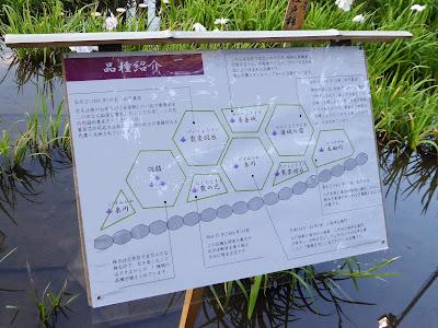 山田池公園・花しょうぶ園 品種紹介