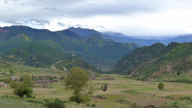 Plant fossils provide new insight into the uplift history of SE Tibet