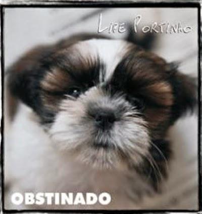 Obstinado