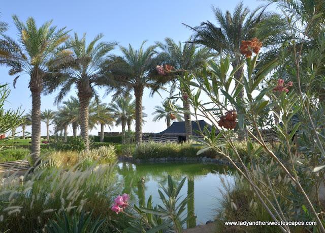 Al Dhafrah Oasis