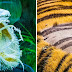 23 Rare Pictures That Reveal The Power Of Nature