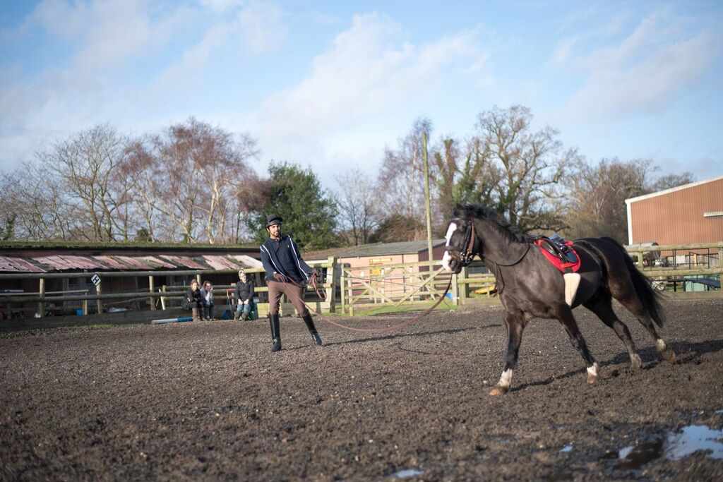 Looking after horses over winter