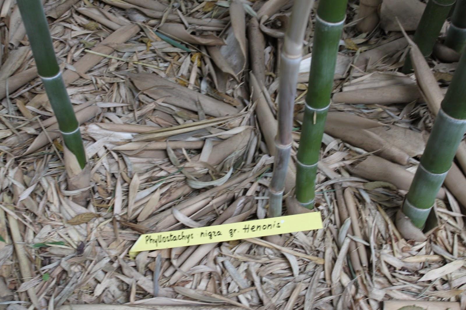 plantes vivaces et bambous. Black Bedroom Furniture Sets. Home Design Ideas