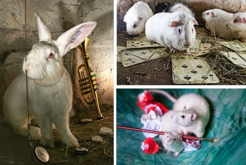 00-La-Collina-dei-Conigli-ONLUS-Alice-in-Wonderland-Rescue-Animal-Photographs-www-designstack-co