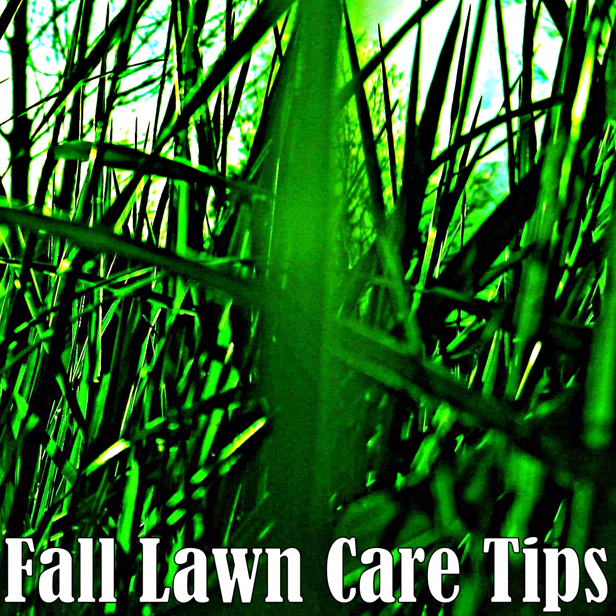 Gardening With Red Hill: Fall Lawn Care